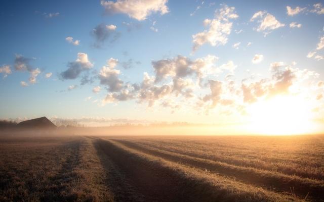 Niebla matinal en el campo.